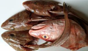 fish_carcasses